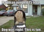 cat-in-the-mail
